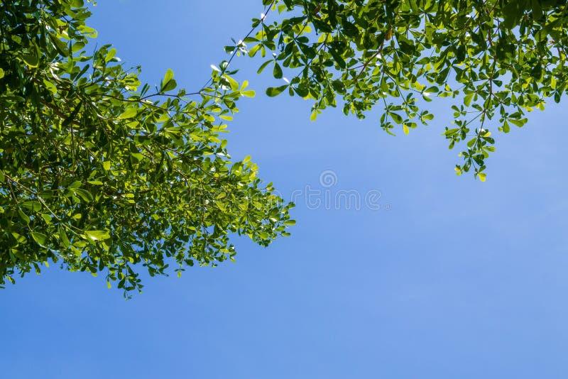 Gröna sidor och filialer med bakgrund för blå himmel för abstrakt jord för förälskelse för texturmiljönatur fotografering för bildbyråer