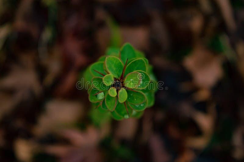 Gröna sidor, regndroppar arkivbilder