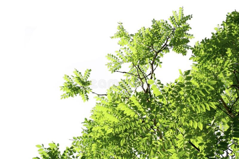 Gröna sidor som isoleras med urklippbanor på en vit bakgrund arkivfoton
