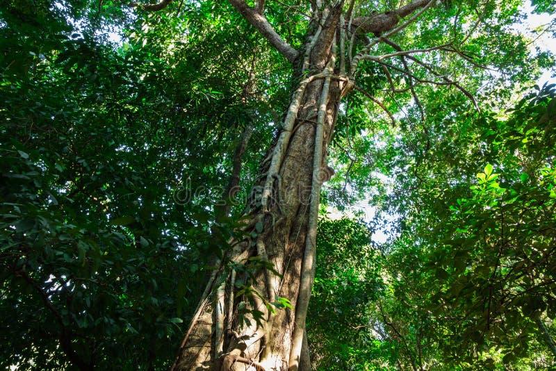 Gröna skogträd i natur arkivfoton