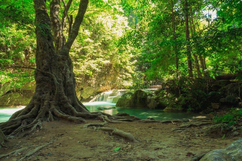 Gröna skogträd i natur arkivbilder