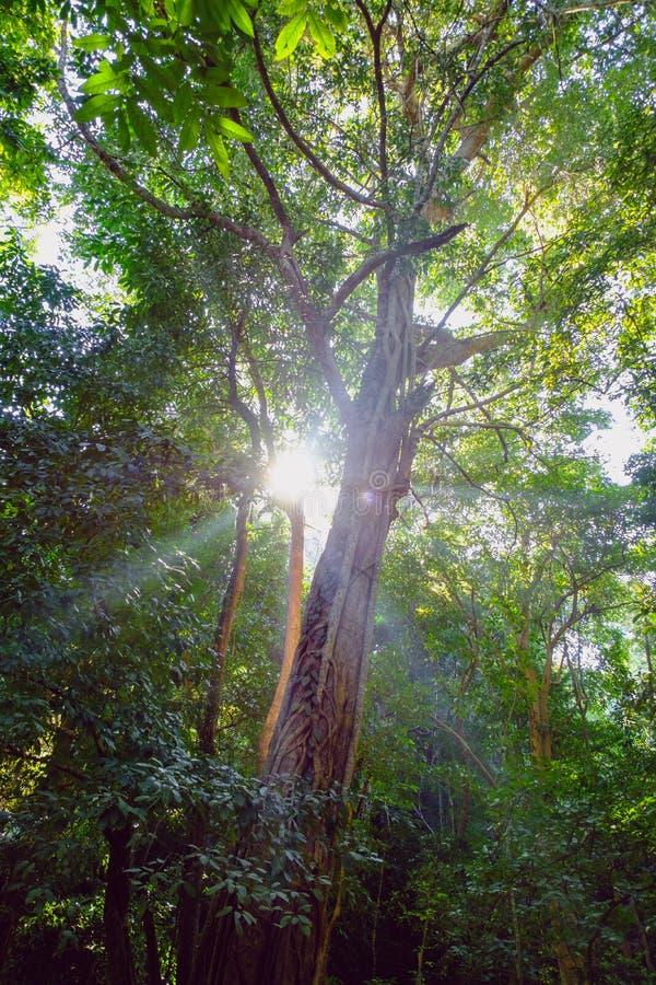 Gröna skogträd, i natur arkivbilder