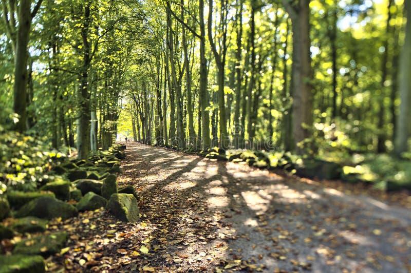 Gröna skogtrees fotografering för bildbyråer