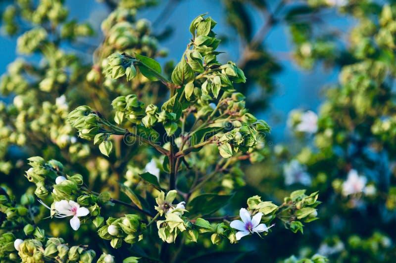 Gröna små växter med fotoet för vita blommor fotografering för bildbyråer