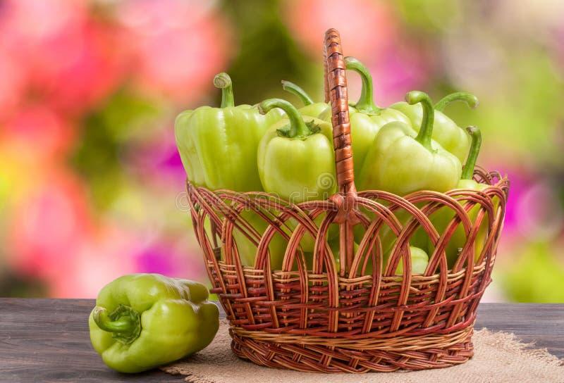 Gröna spanska peppar i en vide- korg på trätabellen med suddig bakgrund royaltyfria foton
