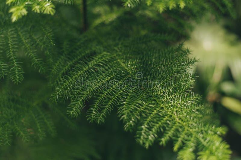 Gröna spensliga sidor på en suddig bakgrund arkivfoto