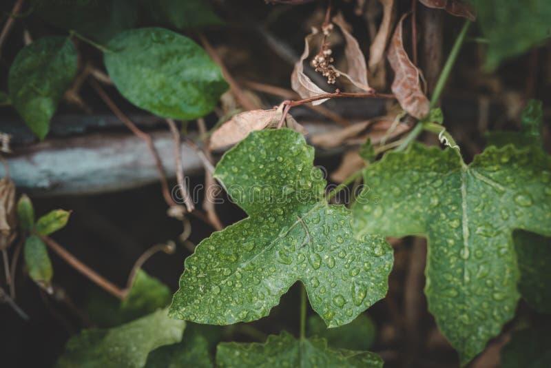 Gröna stilar för tjänstledighettappningfilter royaltyfria bilder