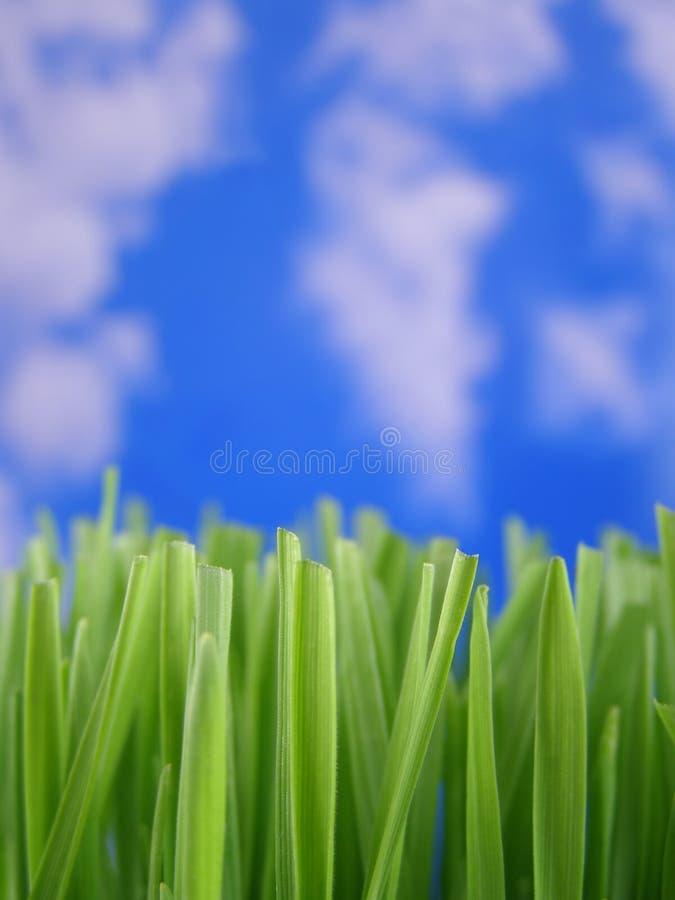 gröna sugrör för gräs arkivbild
