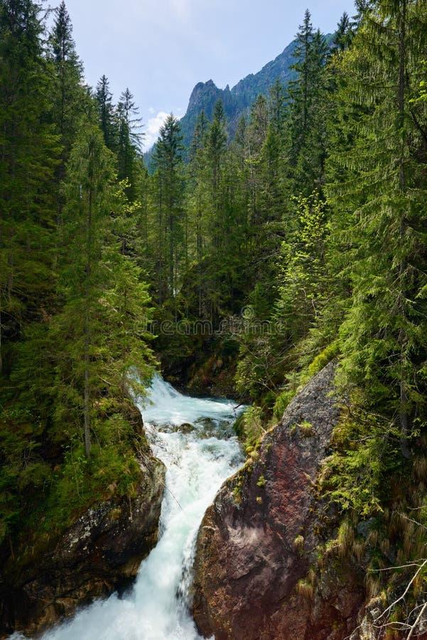 Gröna Tatra för vatten för skogvattenfallström berg Carpathians royaltyfri bild