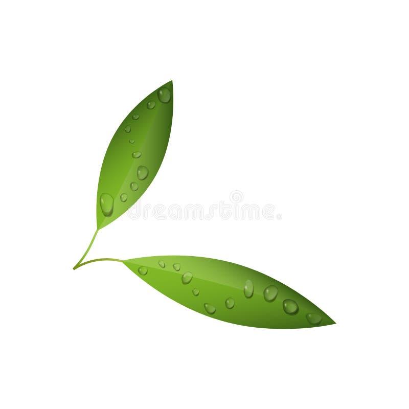 Gröna teblad med vatten tappar den isolerade vektorn royaltyfri illustrationer