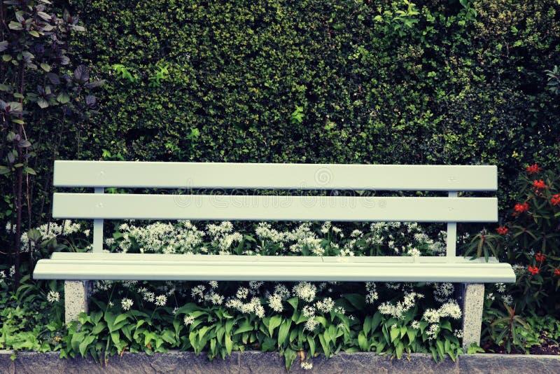 Gröna trä parkerar bänken på trädgården arkivbild