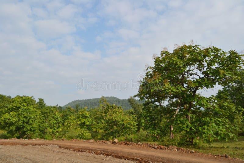 Gröna träd, blå himmel, vitmoln och Vindya Hil arkivfoto