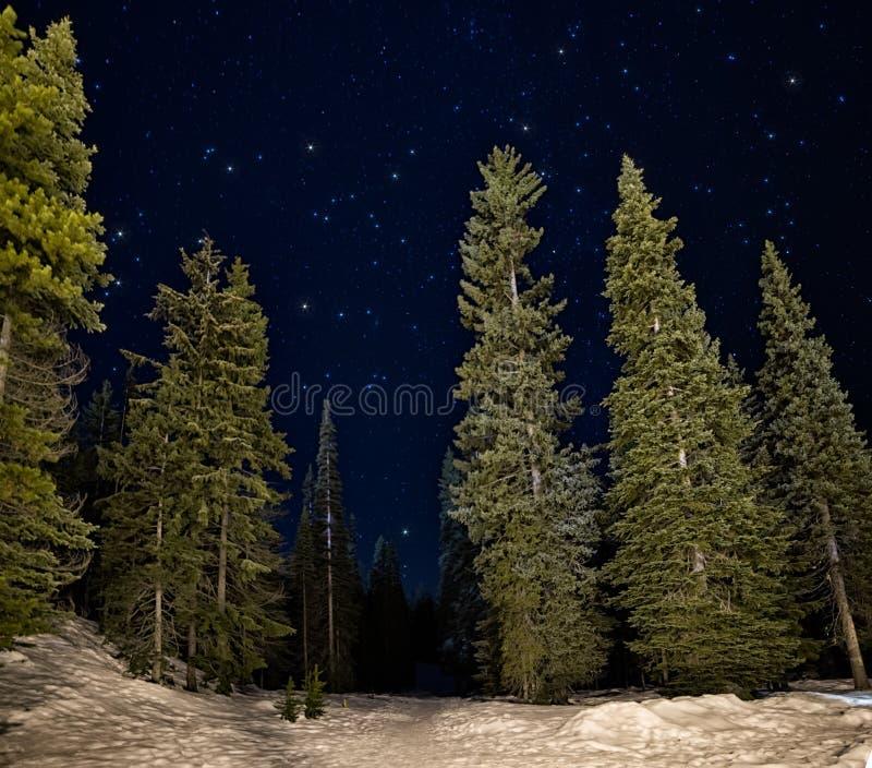 Gröna träd för Lit på natten med stjärnor fotografering för bildbyråer