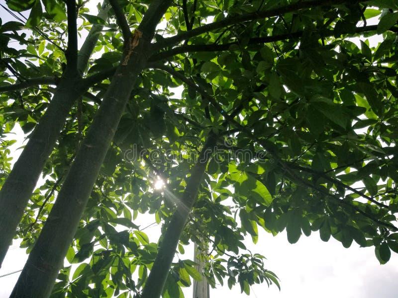 Gröna träd för natur royaltyfria foton