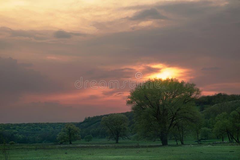 Gröna träd i en bergig dal för vår på solnedgången på ängar Molnig himmel för afton på landskapet för solnedgångdjurlivnatur royaltyfri fotografi