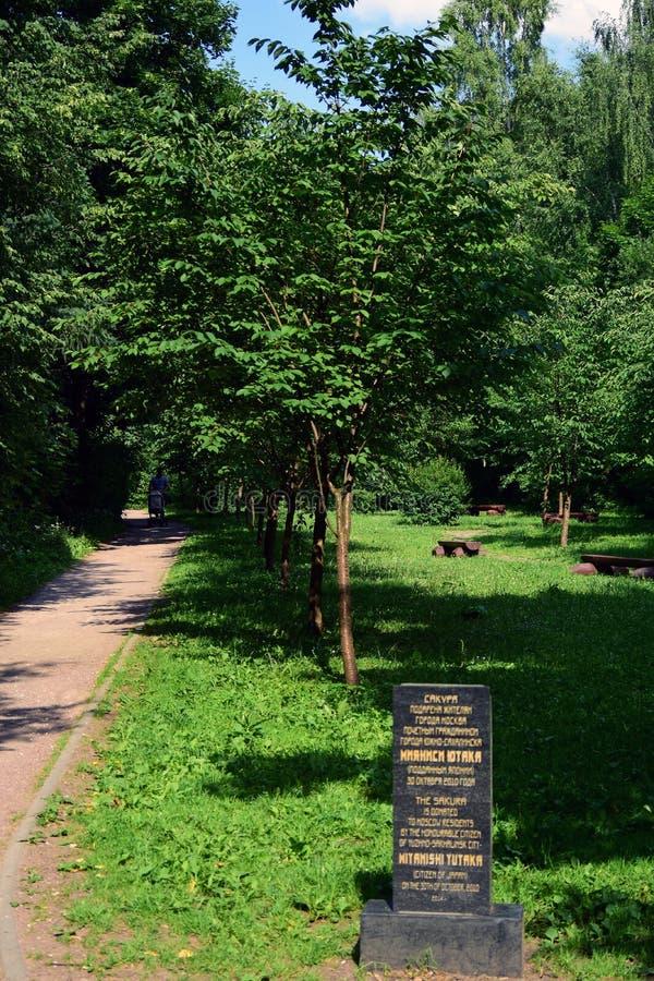 Gröna träd i en sommar parkerar Japanträdgård i den Birulevsky arboretumen arkivfoto