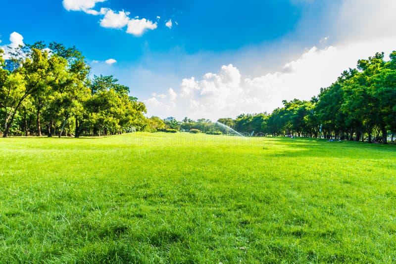 Gröna träd i härligt parkerar över blå himmel royaltyfri fotografi