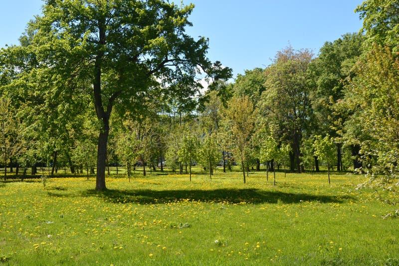 Gröna träd och gräs royaltyfri foto