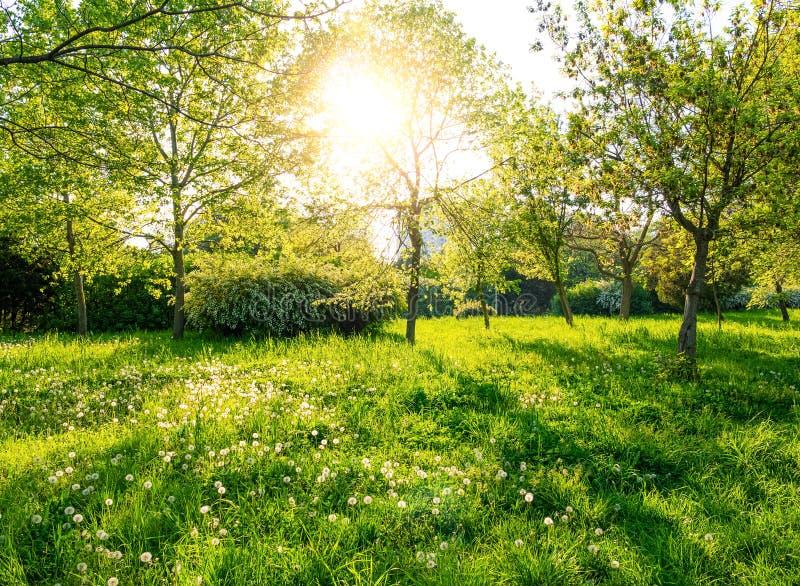 Gröna träd och gräs på den soliga dagen fotografering för bildbyråer