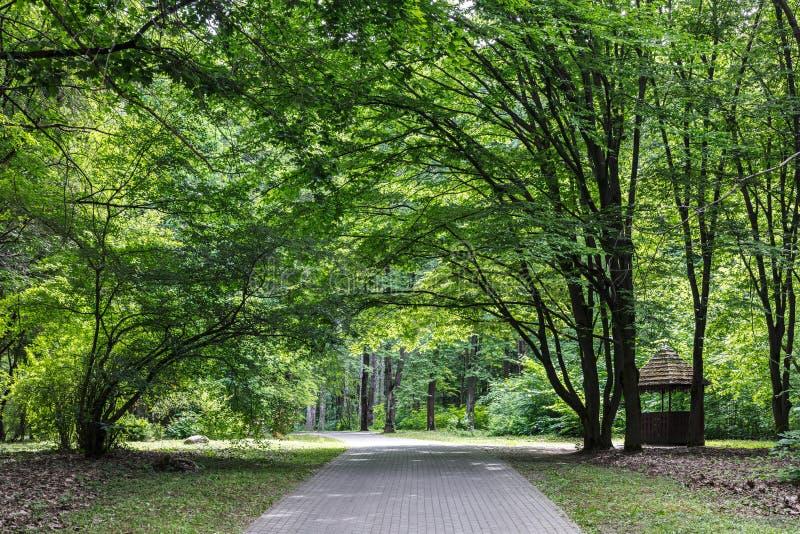 Gröna träd parkerar in på den soliga sommardagen arkivfoton