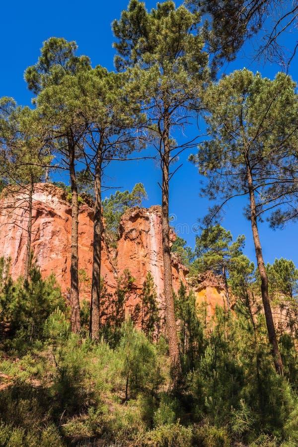 Gröna träd skapar kontrast med ockran royaltyfria foton