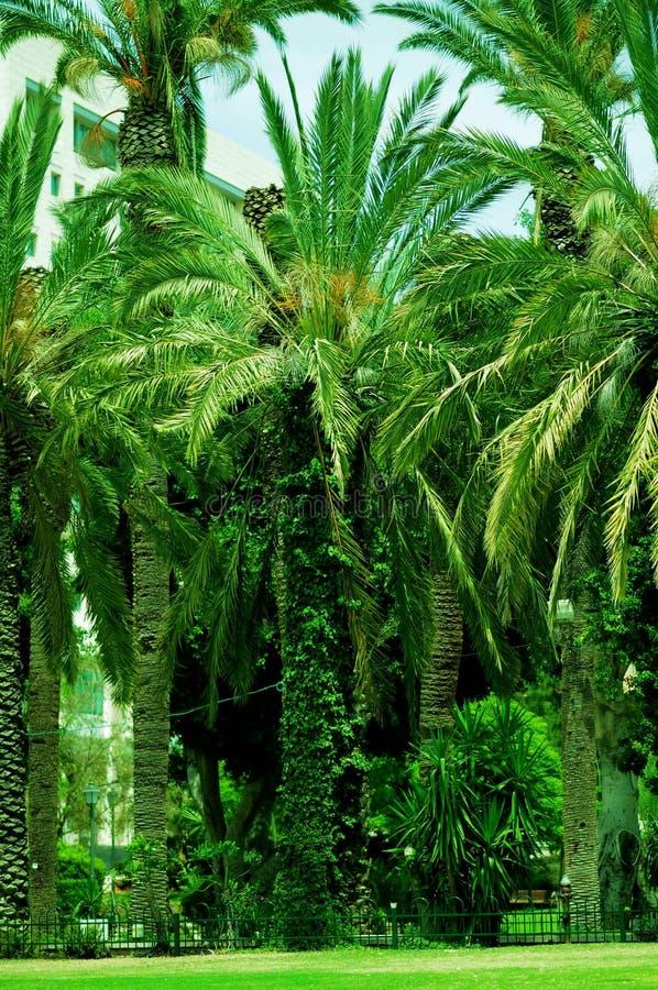 gröna träd tillsammans arkivbild