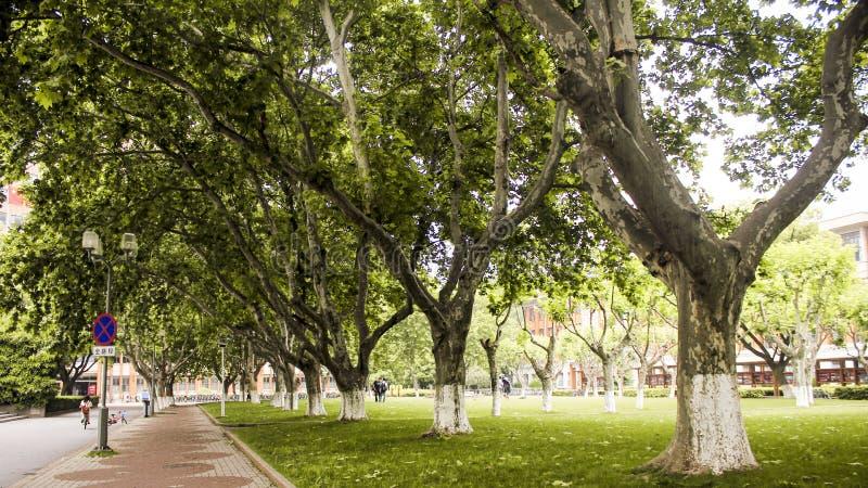 gröna trees arkivbild