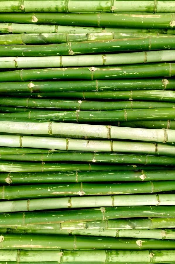 gröna trees för bambu royaltyfria foton