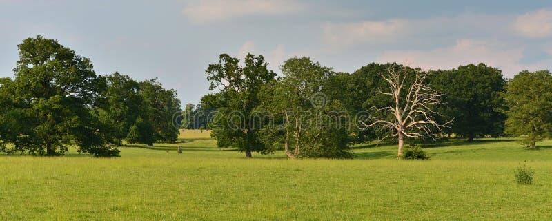 gröna trees för fält royaltyfria bilder