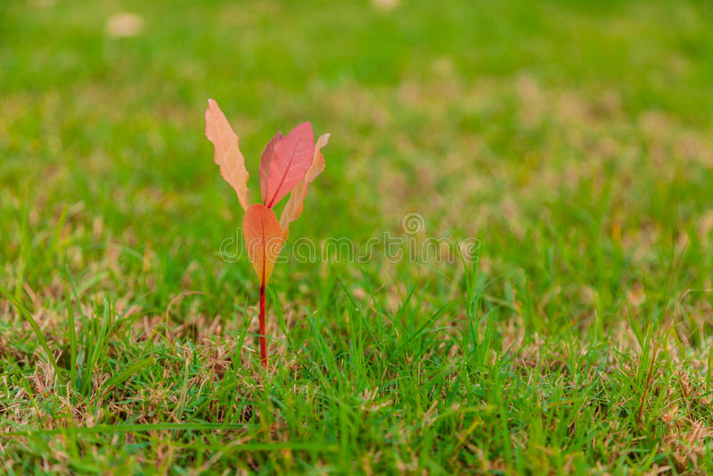 gröna trees för gräs royaltyfri foto