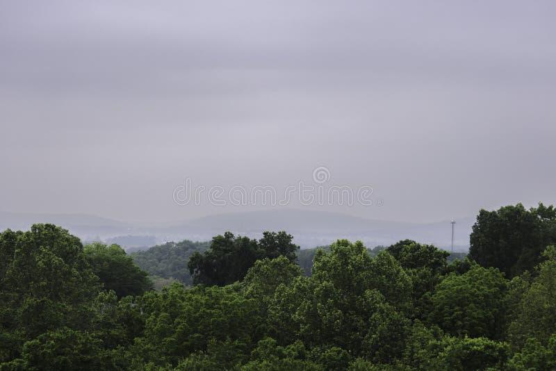 Gröna Treetops under mulen himmel royaltyfri fotografi