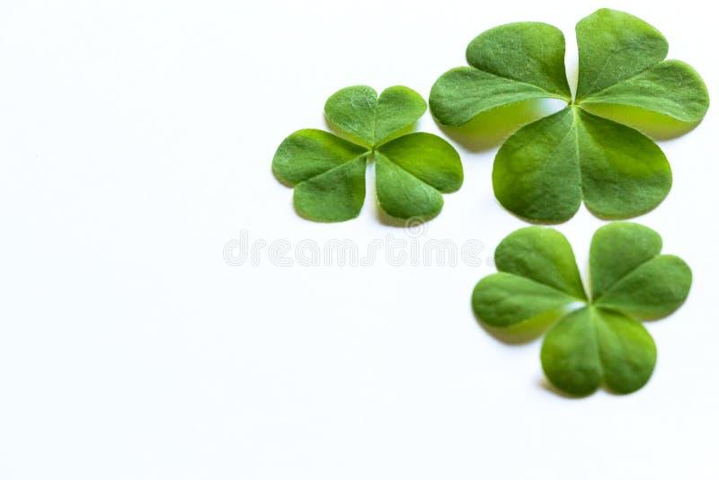 Gröna treklöverer i vit bakgrund arkivfoto