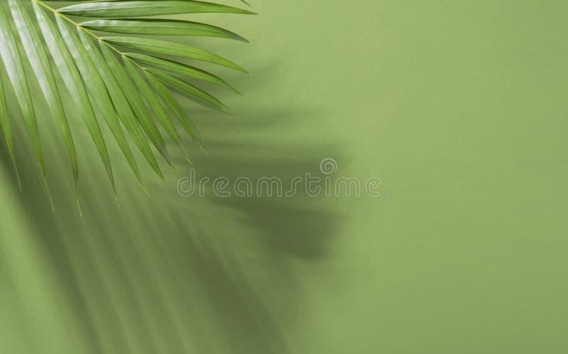 Gröna tropiska palmblad på grön bakgrund med solljus L?gger den id?rika l?genheten f?r minsta sommar royaltyfri bild