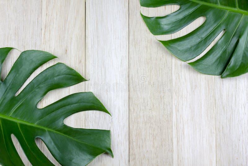 Gröna tropiska splittringsidor på balsaträ panels bakgrund royaltyfri foto