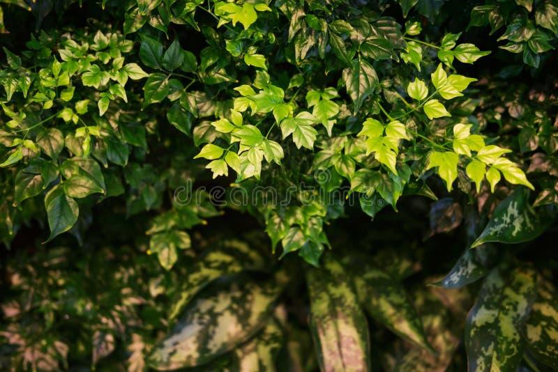 Gröna tropiska växter royaltyfri foto