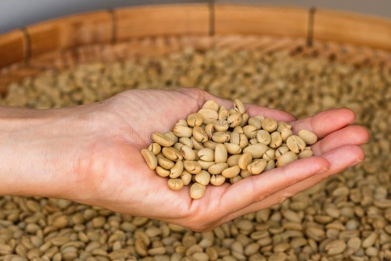 Gröna unroasted kaffebönor förestående royaltyfri bild