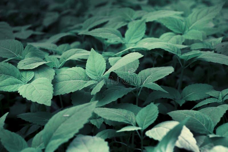 gröna växter royaltyfria foton