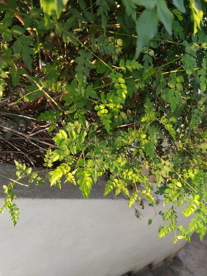 gröna växter fotografering för bildbyråer