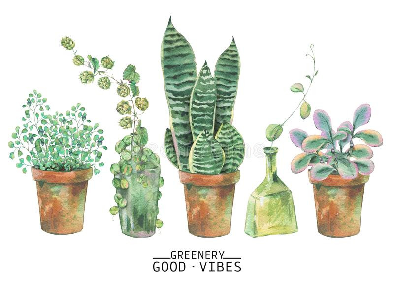 Gröna växter för vattenfärg i krukor vektor illustrationer