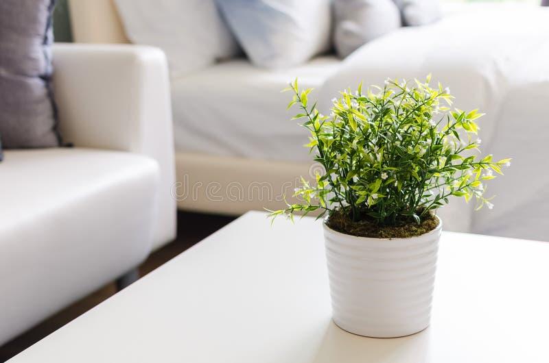 Gröna växter i den vita vasen royaltyfria bilder