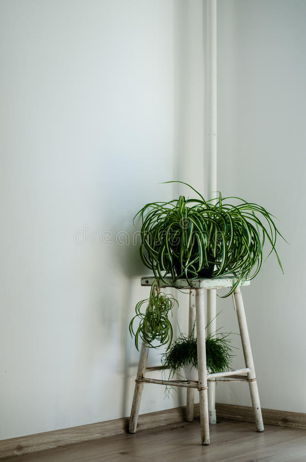 Gröna växter i vitt rum royaltyfri fotografi