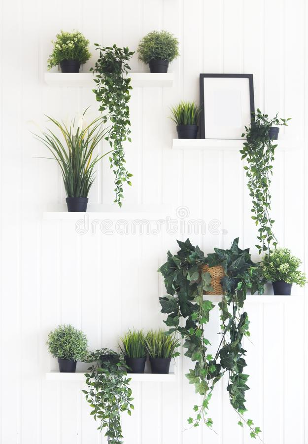 Gröna växter på hyllor på den vita väggen i rummet arkivfoto