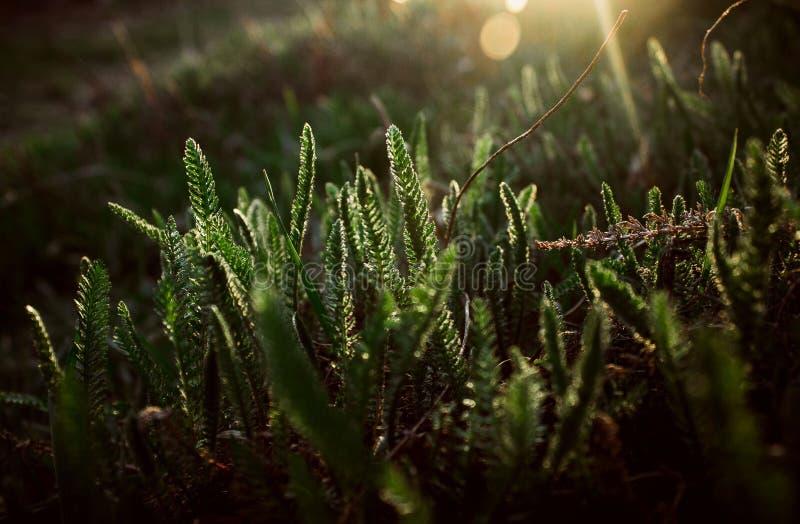 Gröna växter under strålarna av solen royaltyfri bild