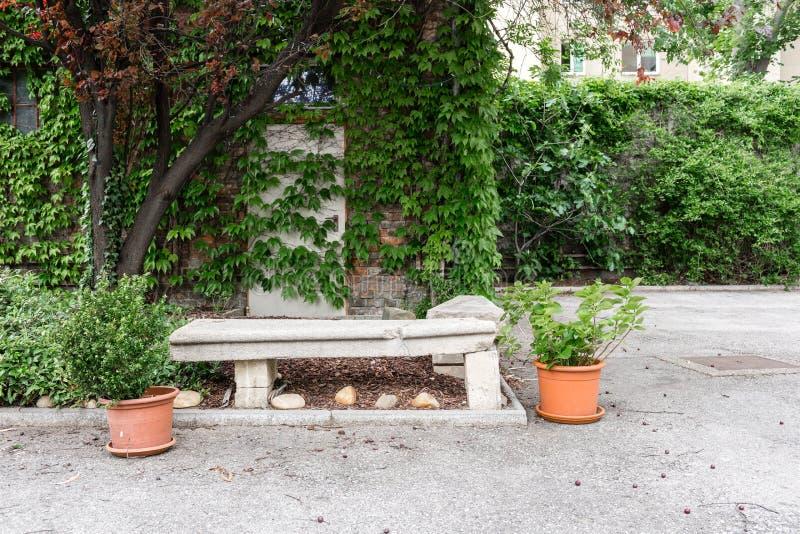 gröna växtkrukar Utomhus- på sommaruteplatsen Perenn sommarträdgård för litet radhus Österrike vienna arkivbilder