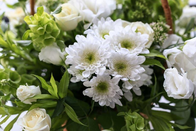 Gröna vildblommor för sommar och kryp, vit maskros, jordgubbar, purpurfärgad safflower, härlig botanik royaltyfri fotografi