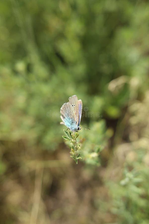 Gröna vildblommor för sommar och kryp, vit maskros, jordgubbar, purpurfärgad safflower, härlig botanik royaltyfria bilder