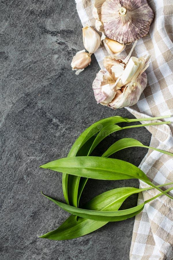 Gröna vildvitlöksblad och vitlökslökar Ramsons blad arkivfoton