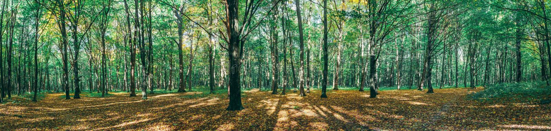 gröna wood solljusbakgrunder för natur guld- wood solljusbakgrunder för natur fotografering för bildbyråer