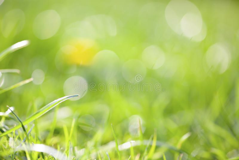 gröngräs med mycket ytligt djup - mindhet, meditation, psykisk hälsa arkivfoton