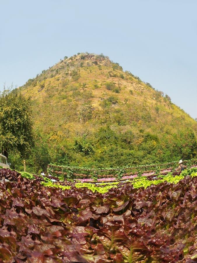 Download Grönsak för röd korall fotografering för bildbyråer. Bild av utomhus - 37346667